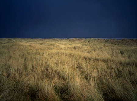 Marram grass, Baltray, Co Meath, Ireland Stock Photo - 7188748