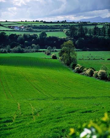 Farmscape, Irland Standard-Bild - 7328828