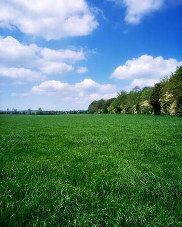 Gras veld, Ierland Stockfoto