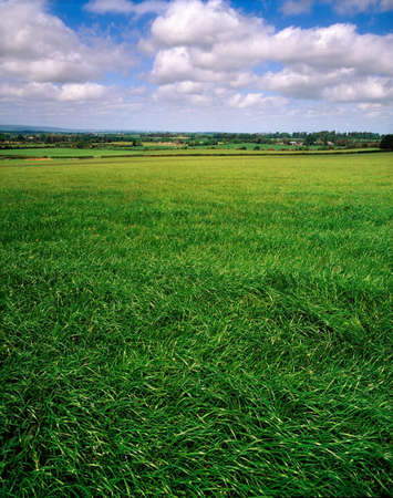 Field, Bunclody, Co Wexford, Ireland Stock Photo - 7328853