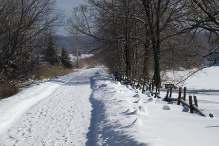 Bare trees line a snow covered country road Stock Photo - 7328814