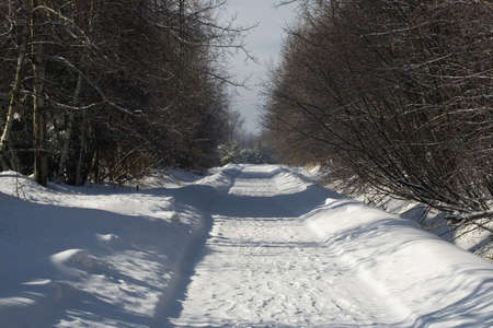 Bare trees line a snow covered country road Stock Photo - 7328818