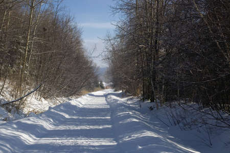 Bare trees line a snow covered country road photo