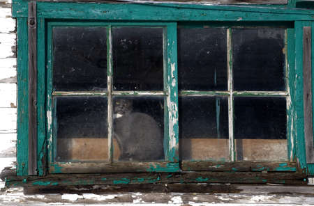 weather beaten: Gatto guardando fuori dalla finestra di una casa di paese meteo picchiato