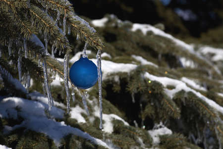 Pine tree covered in snow and icicles, with blue Christmas decoration Stock Photo - 7268313