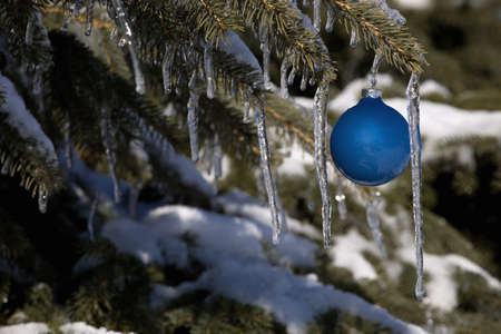 Pine tree covered in snow and icicles, with blue Christmas decoration Stock Photo - 7268333