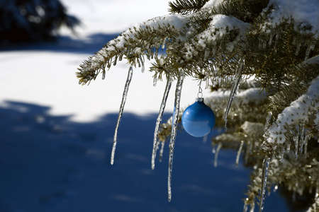 Pine tree covered in snow and icicles, with blue Christmas decoration Stock Photo - 7268375