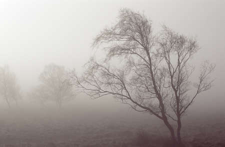 Derbyshire, England, United Kingdom; Bare tree in a fog covered field Stock Photo - 7328813