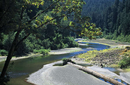 river: Eureka, California, USA; River winding through a Redwood forest Stock Photo