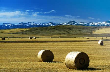 fardos: Montana, Estados Unidos; fardos de heno en un campo, con monta�as cubiertas de nieve en segundo plano  Foto de archivo