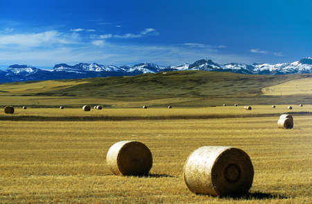 Montana, USA; Hay bales on a field, with snow-covered mountains in background Stockfoto