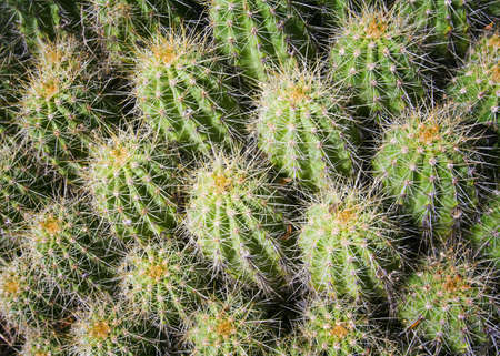 raniszewski: New Mexico, USA; Close up of cactus cluster