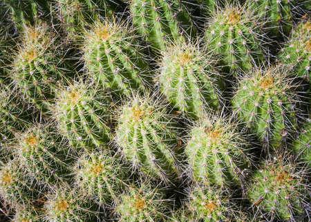 raniszewski: New Mexico, USA; Close up of cactus cluster