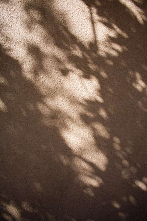 raniszewski: Tree shadow on a stucco wall