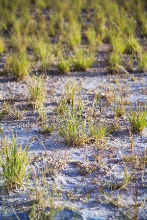 raniszewski: Grass in the desert