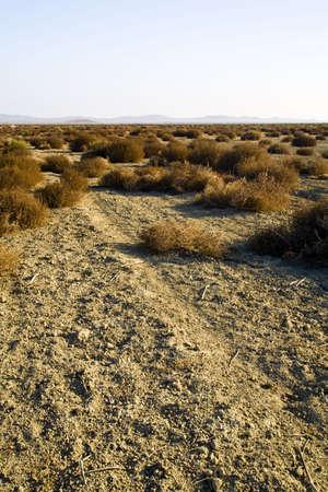 raniszewski: Desert landscape