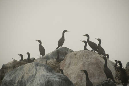 Birds on rocks Stock Photo - 7190571