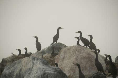 Birds on rocks Stock Photo - 7190571