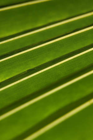 fullframes: Detail of a green tropical leaf in the rainforest