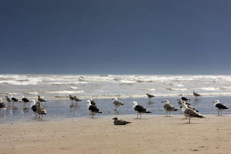 East Riding, Yorkshire, England; Terns and gulls on the foreshore Stock Photo - 7198818