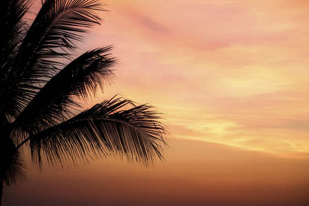 Mexico; Majestic sunset silhouettes palm tree