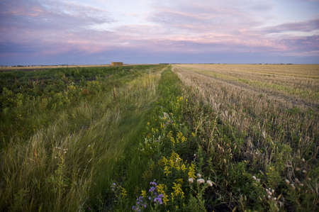 The prairies, Manitoba, Canada Stock Photo - 7198977