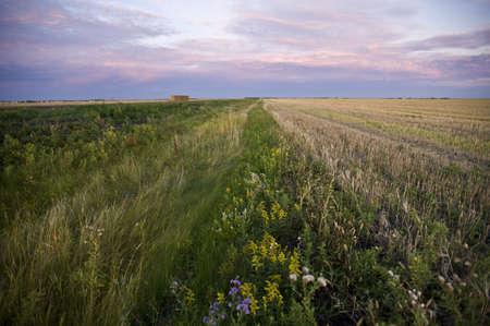 The prairies, Manitoba, Canada Stock Photo - 7198977