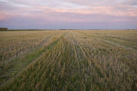 Prairie field, Manitoba, Canada Stock Photo - 7195682