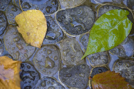 levit: Wet leaves and stones, Lake of the Woods, Ontario, Canada Stock Photo