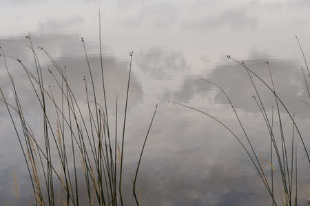 lake fronts: Reeds in the fog, Lake of the Woods, Ontario, Canada Stock Photo