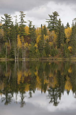 lakefronts: Fall foliage, Lake of the Woods, Ontario, Canada