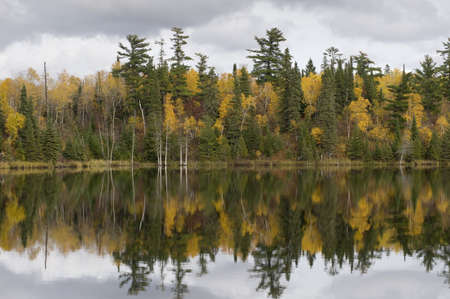 Fall foliage, Lake of the Woods, Onta, Canada Stock Photo - 7195882