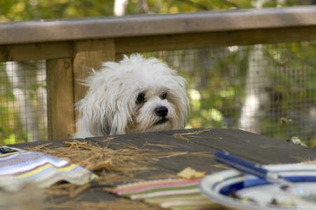 levit: Dog at picnic table Stock Photo