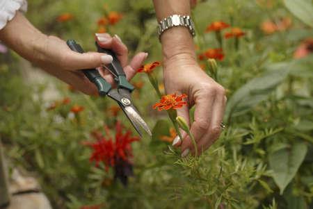 Gardening, Lake of the Woods, Ontario, Canada