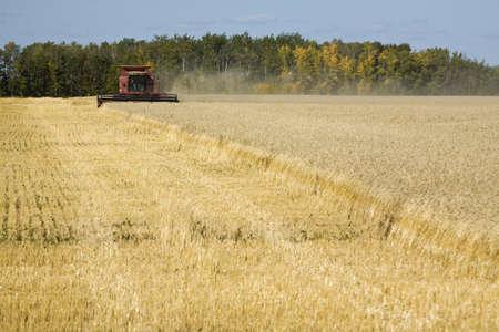 Combine harvesting wheat field Stock Photo - 7211256