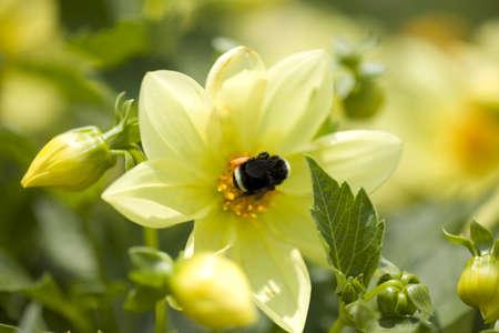 Closeup of a flower, Mount Hood, Oregon, USA   Stock Photo - 7192520