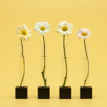 Four flowers Stock Photo - 7194809