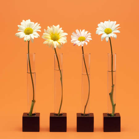 Four flowers Stock Photo - 7195707