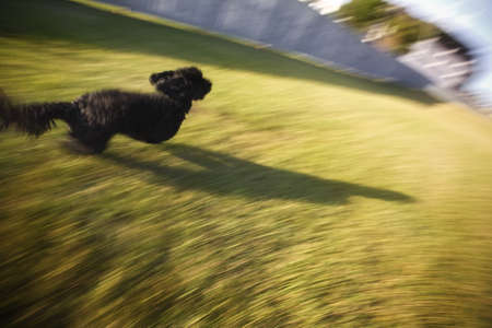 unrestrained: Dog running on grass