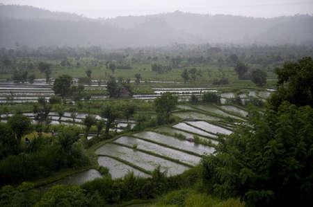 Bali, Indonesia; Rice terraces Stock Photo - 7195183