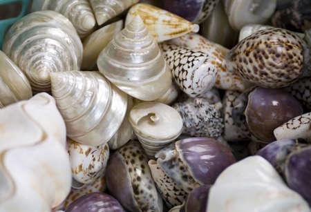 fullframes: Shells