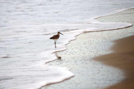 wildanimal: Puerto Vallarta, Mexico; Bird on the beach