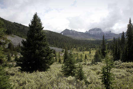 Forest in the mountains Stock Photo - 7213479