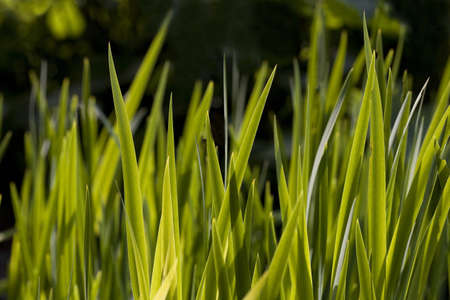 Close-up of blades of grass Stock Photo - 7198970
