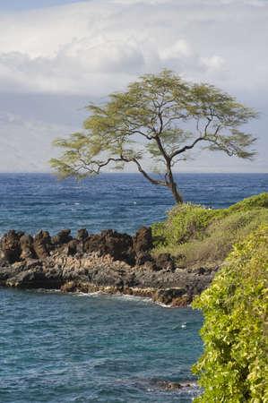 levit: Tree on shore; Wailea-Makena, Maui, Hawaii