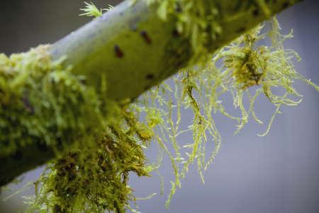 枝にモスします。 写真素材