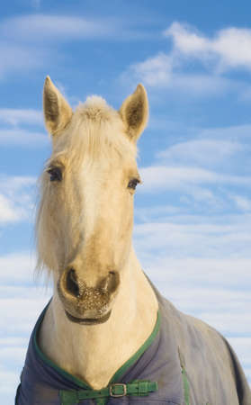 blanket horse: Horse with a blanket Stock Photo