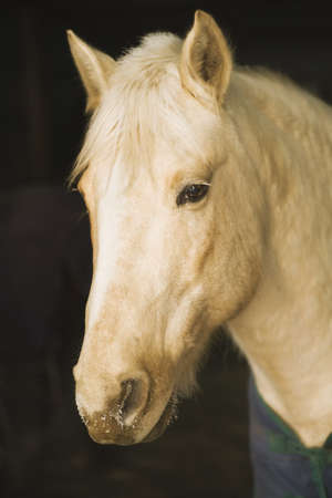 blanket horse: Horse portrait, Minnesota, USA Stock Photo