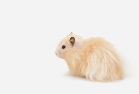 pet photography: Hamster