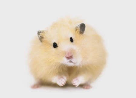 chris: Hamster